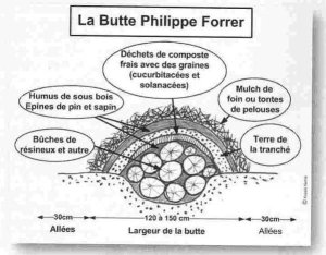 Butte Forrer